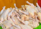 سوء مدیریت عامل بی ثباتی افزایش قیمت مرغ