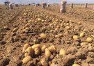 چرا قیمت سیب زمینی دوباره نجومی شد؟