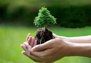 درخت سر چشمه ی حیات